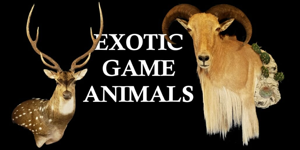 Exotic Taxidermy Prices | Texas Taxidermy Prices