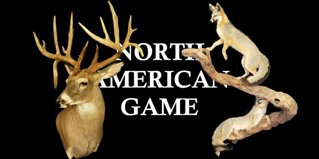 Texas Taxidermy Prices | North American Game Taxidermy Prices