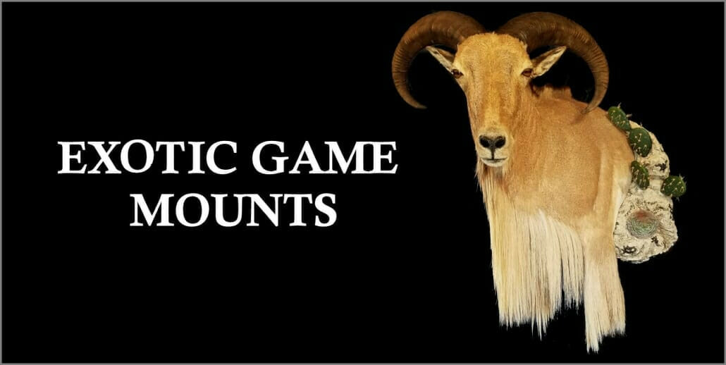 Exotic Game Mounts | Cypress Slough Taxidermy